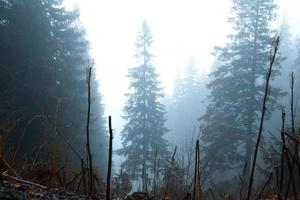 golden forest with fog and warm light photo