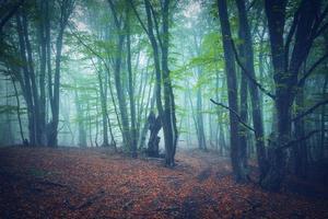 Autumn forest in fog. Beautiful natural landscape.