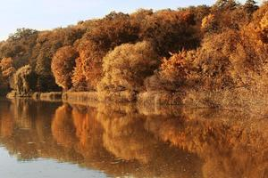 autumn forest in the reflection of water photo