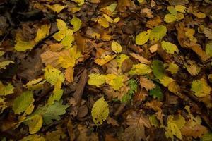 en el bosque. foto