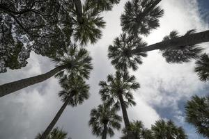 palmboom silhouet