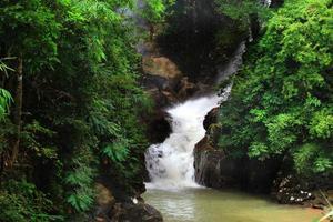 bosque y cascada foto