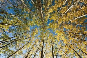 Autumn in forest, october photo