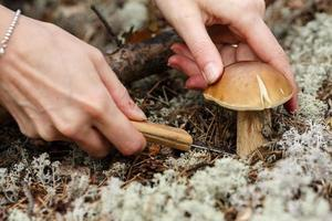 Woman cuts the cep photo