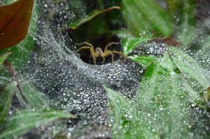 gotas de rocío en el nido de araña foto