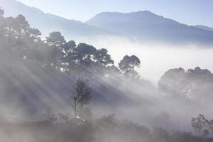 mistig bos met uitzicht op de bergen