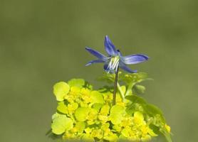 Flowers Scylla