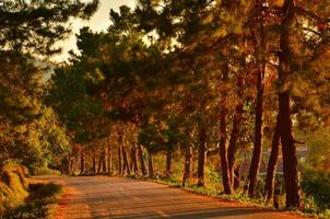Road on Autumn Pine Forest photo
