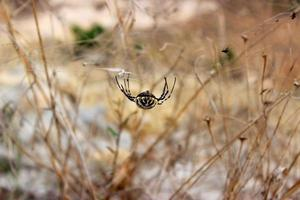 smiling spider photo