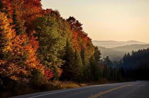 cores de outono e estrada