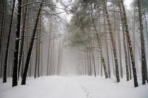 camino en el bosque de coníferas de invierno.