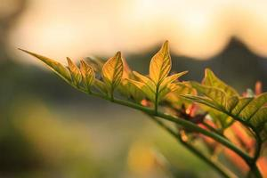 Young tree leaf in the morning