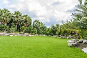 jardín de palmeras foto