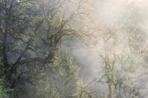 La luz del sol de la mañana filtrada brilla sobre la niebla invernal en el bosque foto