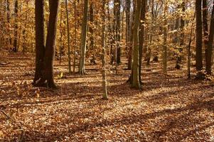 Woods in Autumn photo