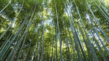 montaña arashiyama kyoto japón famoso monumento para turistas con