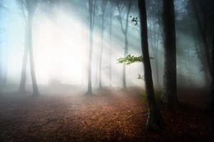 Magic side rays of light in foggy forest photo