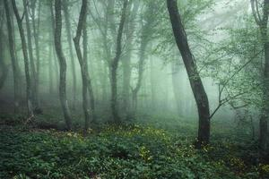 Mysterious dark forest in green fog with flowers