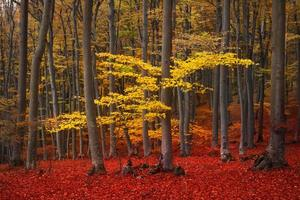 Clear view of yellow trees in the forest