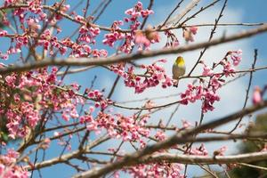 yellow bird at pink flower on tree
