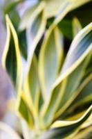 folhas borradas