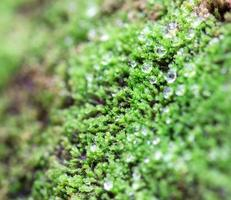 selective focus of green moss photo