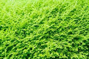 Moss leaf texture photo