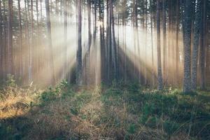 beautiful light beams in forest through trees. Retro grainy film