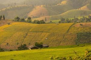 Crop hill in Chiang Mai