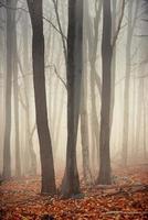 día de otoño en el bosque encantado foto