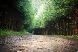 long road in a wood