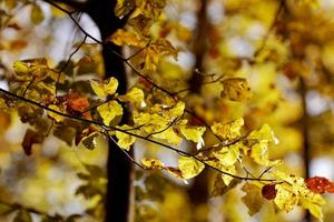 Beautiful leaves in forest, autumn 7