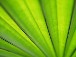 beautiful palm leaf background
