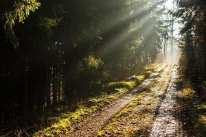 Forest path with lovely rays of sunlight