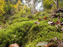 moss in autumn forest- shallow depth of field photo
