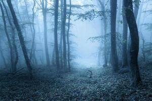 Trail through a mysterious dark forest in spring photo
