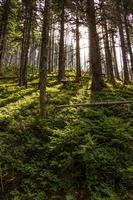 Late summer sunlight breaking through the trees mystical lane