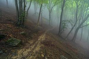 sendero de montaña en la niebla foto
