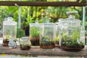 terrarium, kleine boom in een fles
