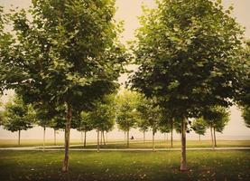 bomen in park, getinte foto