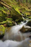 mountain stream in wild forest
