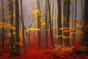 Beautiful mistic forest during autumn