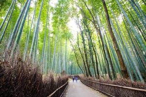 The bamboo forest of Kyoto, Japan photo