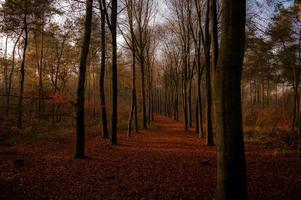 Colourfull path photo