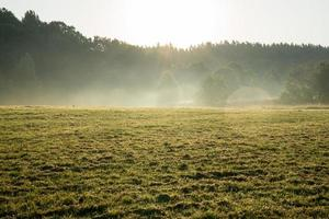 misty fields and meadows after the rain in summer photo