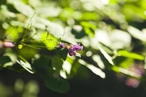 flores de otoño foto