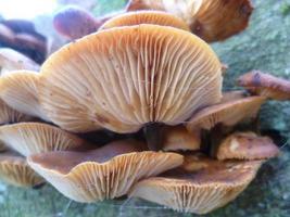 hongos de los árboles foto