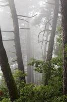 Fog. photo