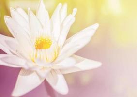 beautiful flowers - Soft Focus  background photo