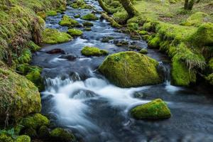 Wild stream in old forest, water blurred in motion